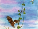 Kite Nest