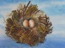 Nest # 2